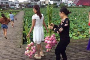 Công viên Trung Quốc đóng cửa vì người dân bẻ trụi hoa sen