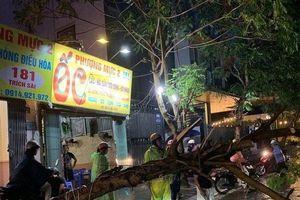 Cây xanh bật gốc trước bão giữa phố Hà Nội, hai phụ nữ bị thương