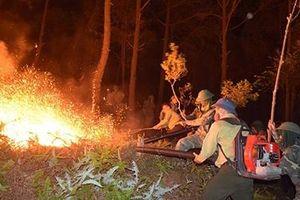 Những người lính quả cảm cứu rừng