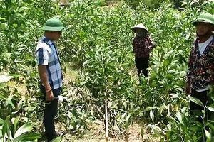 Mâu thuẫn, người đàn ông chặt hạ hơn 3000 cây keo trong vườn nhà hàng xóm
