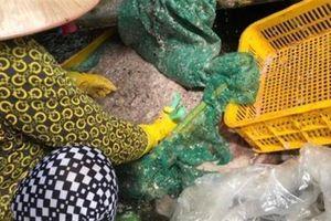 Thương lái tranh nhau mua vảy cá: Bí ẩn hé lộ