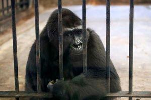 Ám ảnh gương mặt động vật bị đối xử vô nhân đạo