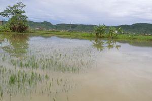 Cháu bé 22 tháng tuổi tử vong vì rơi xuống ruộng lúa ngập nước sau mưa ở Nghệ An