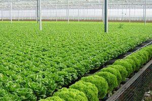 Thanh Hóa cho phép chuyển đổi 5,46 ha rừng làm trang trại
