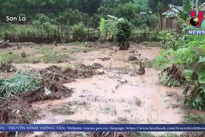 Mưa lũ gây thiệt hại về hoa màu, tài sản tại Sơn La