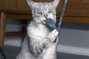 Gặp chú mèo đưa tang và khuôn mặt chán đời nhất TG