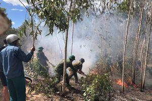 Kịp thời dập tắt cháy rừng tại khu vực huyện Tuy An, Phú Yên