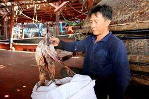 Trung Quốc từ chối thông quan, khoảng 1.000 tấn mực khô của ngư dân ứ động tại Quảng Nam