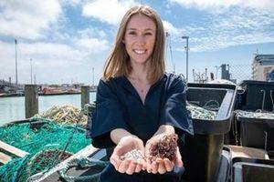Nhựa sinh học từ da cá và tảo biển