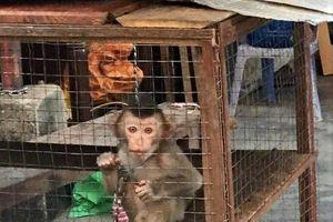 46 cá thể động vật hoang dã được cứu hộ trong tháng 6/2019