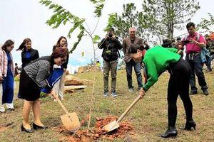 Trồng 1000 cây mai anh đào trên núi Langbiang