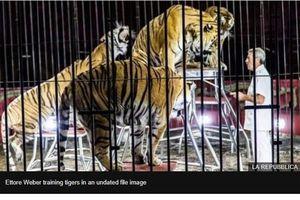 Người luyện thú xiếc hàng đầu thế giới bị 4 con hổ vồ chết