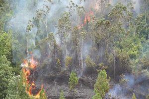 Đà Nẵng: Tiếp tục cháy lớn khu rừng tràm