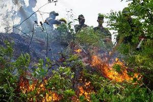 'Bà hỏa' ghé thăm rừng tự nhiên Đà Nẵng