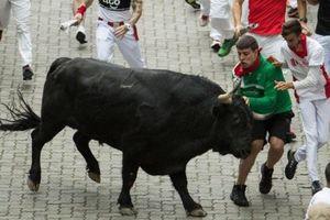 Nhiều người bị bò húc trong lễ hội 'Chạy đua cùng bò tót'