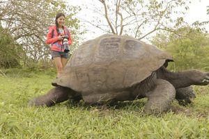 9 động vật kỳ lạ du khách có thể 'đụng độ' khi thám hiểm Galapagos