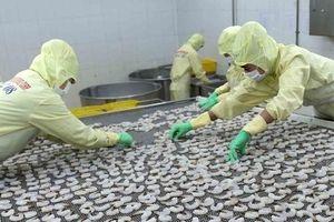 Doanh nghiệp tự tin với đơn hàng xuất khẩu tôm những tháng cuối năm