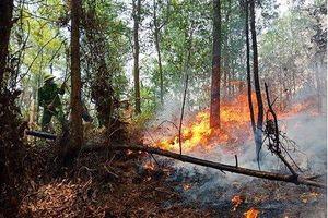 Hà Tĩnh tiếp tục cháy rừng trên diện rộng