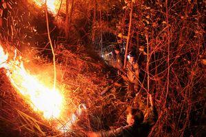 Trắng đêm dập lửa cháy rừng thông ở Hà Tĩnh