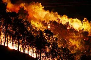 Rừng Hà Tĩnh bùng cháy dữ dội trong đêm