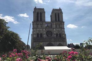 Nhà thờ Đức Bà Paris, tháng 7/2019