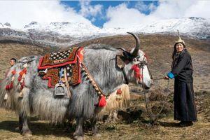 Bhutan – một trong những quốc gia hạnh phúc nhất thế giới qua lời kể của du khách (phần I)