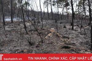 Núi Nầm Hương Sơn hoang tàn sau 2 trận cháy liên tiếp