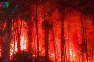 Cháy rừng thông hơn 30 năm tuổi gần lăng vua Khải Định tại Huế