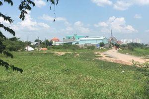 Bắt quả tang người tự xưng phó chủ tịch phường chôn lén 9 con heo chết ở TP.HCM