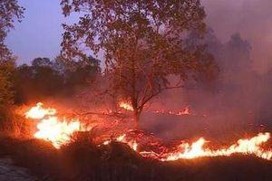 Cháy 20 ha rừng trồng cây keo tại Bình Định