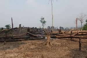 Gia Lai: Sai phạm hơn 935 triệu đồng tại BQL rừng phòng hộ Bắc Ia Grai