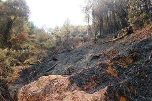 Bình Định: Hỏa hoạn thiêu rụi 20 ha rừng trồng cây keo, bạch đàn