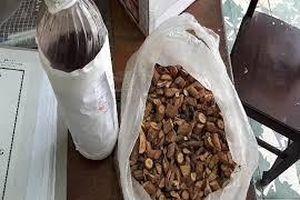 Khánh Hòa: 3 người tử vong, 2 nạn nhân nguy kịch vì uống rượu ngâm hạt trái cây rừng