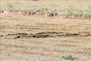 Hơn 1.500 ha ở Ninh Thuận phải ngưng sản xuất vì thiếu nước tưới