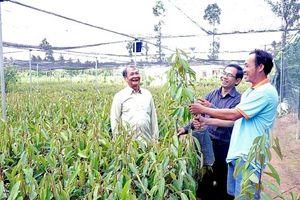 Bến Tre: Sôi động thị trường cây giống