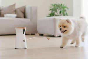7 thiết bị tiện ích chăm sóc thú cưng khi chủ nhân vắng nhà