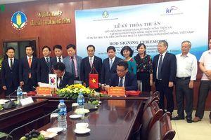 Hàn Quốc hỗ trợ xây dựng chuỗi giá trị lúa gạo ở đồng bằng sông Hồng