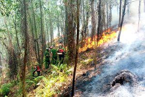 Điều tra, làm rõ nguyên nhân để xảy ra các vụ cháy rừng ở Hương Sơn, Hà Tĩnh