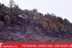 Hà Tĩnh chỉ đạo làm rõ các vụ cháy rừng ở Hương Sơn