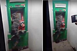 Nữ tài xế say xỉn phóng như 'tên lửa' đâm bốc cháy BMW, 6 người thương vong