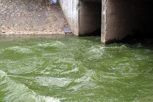 Sông Tô Lịch trong veo, hết mùi hôi thối