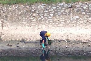 Công nhân mỏi tay nhặt cá chết trắng, nước sông Tô Lịch lại đen xì