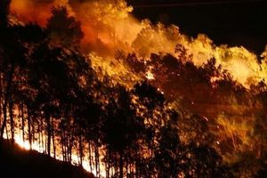 Yêu cầu điều tra hàng loạt vụ cháy rừng nghiêm trọng ở Hà Tĩnh