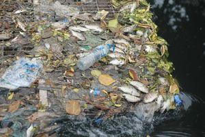 Nước sông Tô Lịch lại đen, cá chết nằm phơi bụng