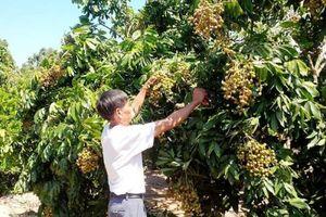 Hưng Yên: Hỗ trợ 10 tỷ đồng doanh nghiệp đầu tư nông nghiệp