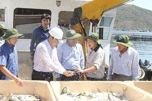 Bộ trưởng Nguyễn Xuân Cường thăm trang trại nuôi cá biển