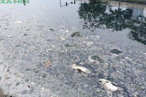 Dừng bơm nước từ Hồ Tây, sông Tô Lịch lại cạn trơ đáy, cá chết nổi lềnh bềnh