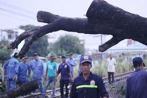 Đường sắt qua Đồng Nai tê liệt nhiều giờ vì cây đổ chắn ngang