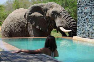 Bơi cùng voi trong hồ nước, trải nghiệm có giá 353 USD