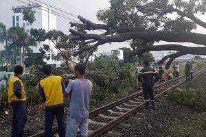 Cây đổ, đường sắt Bắc - Nam qua Biên Hòa tê liệt
